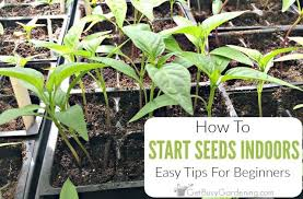 start seeds indoors for beginners