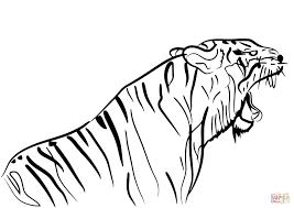 Da Tigre Disegni Disegni Colorare Disegno Da Tigre Disegno Colorare