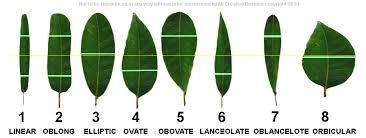 Identify Australian Native Tree Species By Leaf