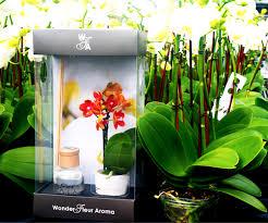 wonder fleur reed diffuser mini pure beauty orchids plainview growers 1 800 flowers 02