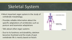 comparative anatomy skeletal system skeletal