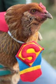 Image result for chicken wearing halloween costume