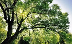 Sun Rays Shining Through Tree ...