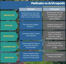 Difference Between Mollusks And Arthropods Compare The