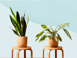 11 low maintenance plants for the
