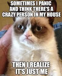 grumpy cat quotes frozen. Plain Quotes Top 40 Funny Grumpy Cat Pictures Frozen Funny Intended Cat Quotes Frozen Z