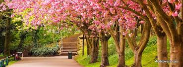 colors of spring scenic nature facebook timeline cover picture scenic nature facebook
