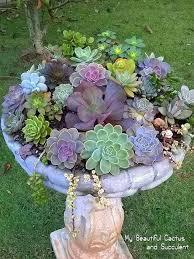 Small Picture 22 ides dco insolites avec des plantes succulentes Gardens