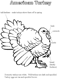 turkey body coloring pages.  Pages Turkey Body Parts Coloring Pages On Turkey Body Coloring Pages