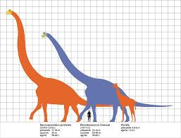 brachiosaurus size brachiosaurus extinct animals