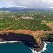 Hawaii kona coffee factory store. Enjoy These Different Types Of Hawaiian Coffee