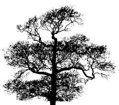 çınar ağacı siyah beyaz ile ilgili görsel sonucu