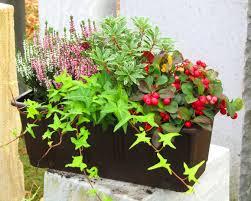 Bepflanzter Blumenkasten 40 Cm Wintergr N Pflanzen Versand F R