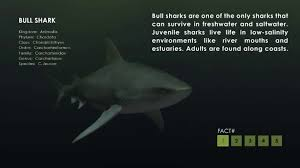 bull shark facts on vimeo