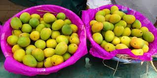 alfonso mango in goa