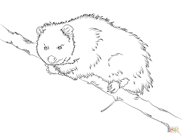 Small Picture Virginia Opossum sits on a Tree coloring page Free Printable