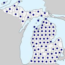 Utricularia vulgaris - Michigan Flora