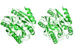 omega-n-methylarginine