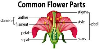 Diagram Of The Parts Of A Flower Sciencing