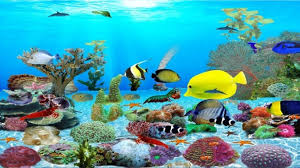 animated aquarium wallpaper for windows 7 free.  Free Download Animated Aquarium Wallpaper For Windows 7 Free   Animated  Desktop Wallpapers Windows Throughout A
