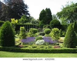 Small Picture Topiary Box Hedge Garden Art or Landscape Image cg4p262998c