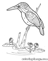 Small Picture Kingfisher bird Free coloring pages for kids