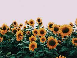 VSCO Flowers Desktop Wallpapers - Top ...