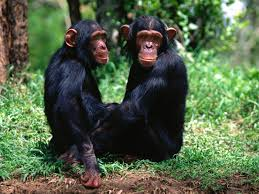 Image result for monkeys photos