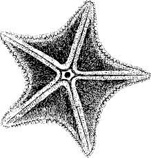 starfish clip art black and white. Delighful White Inside Starfish Clip Art Black And White W