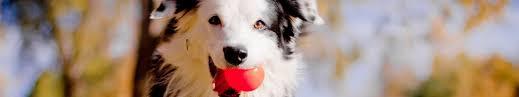 Купить <b>игрушки</b> для собак в Санкт-Петербурге - Зоомагазин ...