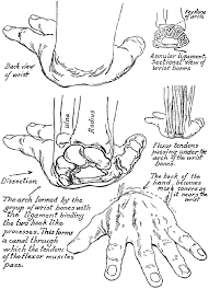 Drawing Hands How To Draw Easy Drawing How To Draw Handpng