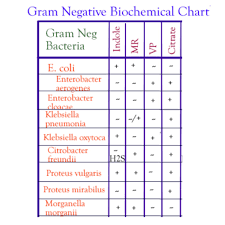 Imvic Chart Imvic Tests The Biotech Notes