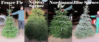 There Can Be A Big Difference Between Different Types Of Christmas Types Of Fir Christmas Trees