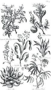 Antique Botanical Prints Vintage Botanical Prints Free Download