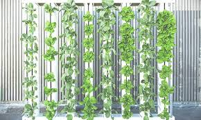 a beginner s guide to vertical farming
