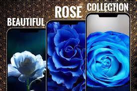 Blue Rose Flower Wallpapers HD ...