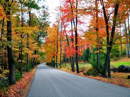 images of fall foliage in new england