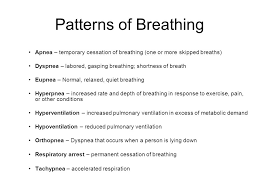 Types Of Breathing Patterns Respiratory Physiology Diaphragm Contracts Increase Thoracic