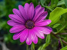 list of 300 flower names a to z with