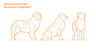Australian Shepherd Dimensions Drawings Dimensions Guide
