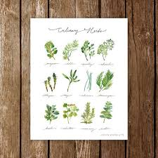 Culinary Herbs Art Print Watercolor Plants Infographic