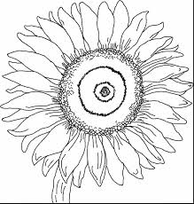 Small Picture astounding sunflower coloring page with van gogh coloring pages