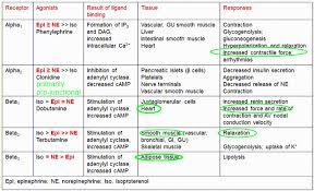 Adrenergic Receptors Chart Receptors Adrenergic Adrenergic Receptors Adrenoceptors