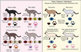 Cat Color Chart Cat Colors Neatorama