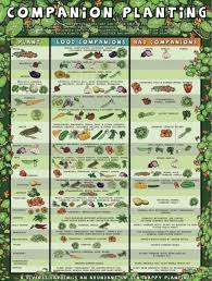 Companion Planting Chart Companion Planting Chart Lots Of Great Info Video Tutorial