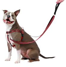 Two Hound Design Harness 2 Hounds Design Has New Freedom Harness Pet Age
