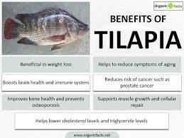 Of amp; - Tilapia Farms Gharo Farming Agri Farming Aqua Pak Intensive Benefits