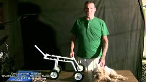 dog wheelchair early retirement