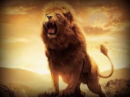 4k ultra lion hd fhdq pics