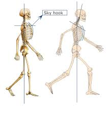 We cover the different bones that make up the rib cage and some of the functions. Neck And Shoulder Issues Brian Esty Lmt